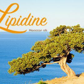 lipidine