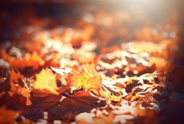 Les huiles essentielles pour combattre l'automne